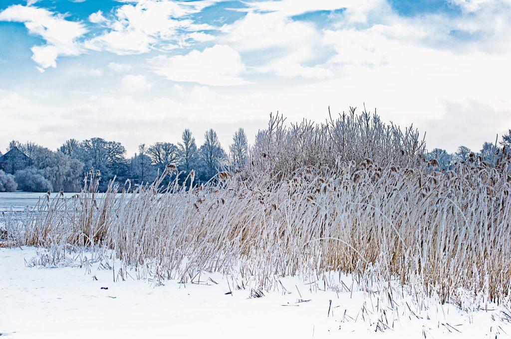 Gefrorene Gräser am Ufer des Sees